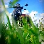 Vespa in dem Grase